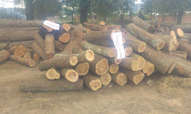 Salta presentó los avances en la implementación del Sistema de Guías Forestales Electrónicas