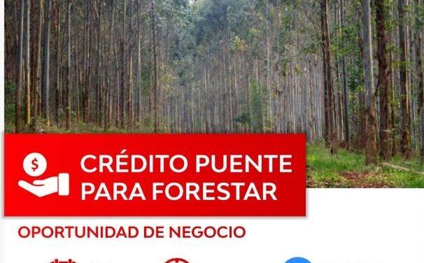 «Crédito Puente para Forestar – Oportunidad de Negocio Provincia de Salta»